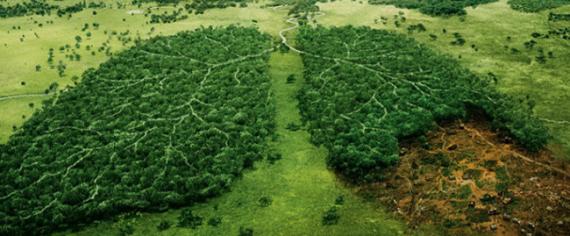 Новое исследование показывающее влияние кроения и вэйпинга на окружающую среду
