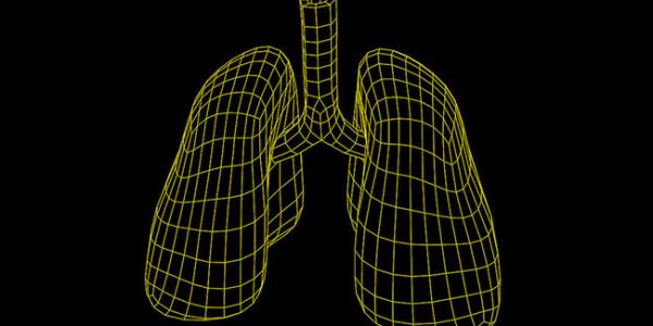 Исследователи создают 3-D модель лёгкого человека, для анализа эффектов вэйпинга, за 3,4 млн. долларов